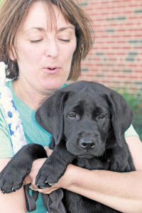 Paula Weronski of Gowanda, puppy raiser for Guiding Eyes for the Blind, holds her new puppy, Pat. Photos Courtesy Guiding Eyes for the Blind.