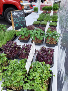 Rooted Locally plants offer a unique twist to your weekly green grocery list. They are available at Elmwood-Bidwell Market in Buffalo.