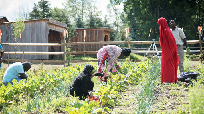 Group of Somali refugees cultivating the land in East Aurora. They grow cut flowers, tomatoes, onions, red potatoes, white potatoes, carrots, sweet peppers, hot peppers and many other vegetables.